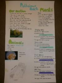 Die SchülerInnen gestalten Poster, um die Ergebnisse ihrer Untersuchung bei der Präsentation im Plenum veranschaulichen zu können. Dabei variieren die thematischen Schwerpunktsetzungen der einzelnen Gruppen, z.B. im Bereich Pflanzen, Insekten, Vögel oder der Vermessung des Bachbetts.