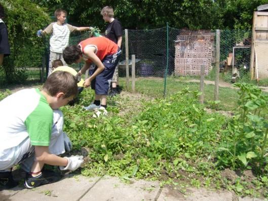 Unterricht: Wir lernen Wildpflanzen von Nutzpflanzen unterscheiden